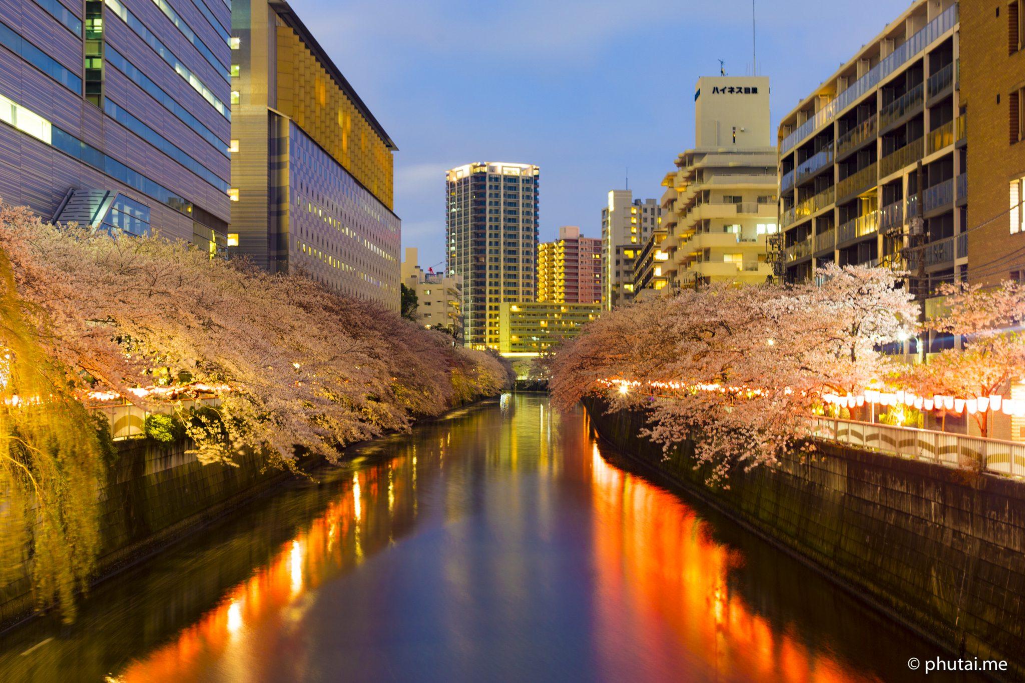 Meguro Sakura River